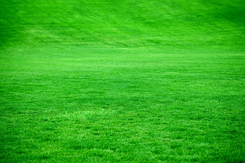 Simple Steps to Greener Grass