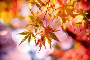 fertilize your lawn in the fall